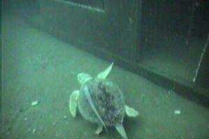 Sea Turtles on the 7 Train